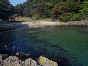 日本海エギング