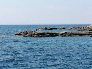 見草漁港エギングポイント